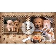 Пакет слайдов Тайная жизнь домашних животных...